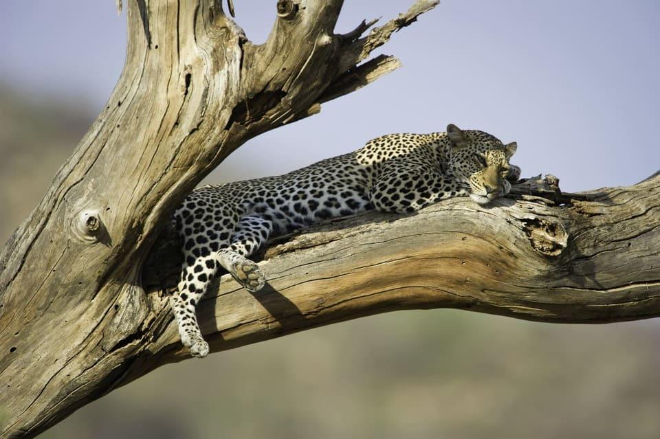 Passez des vacances inoubliables avec un safari de luxe